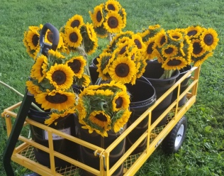 A cartload of happy sunflowers