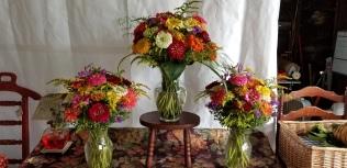 An array of colorful zinnias