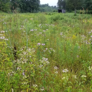 Early summer pollinator habitat
